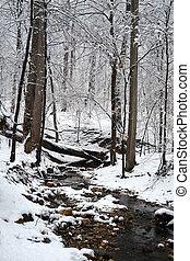 washington, invierno, cc