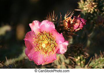 Wasp and Cholla