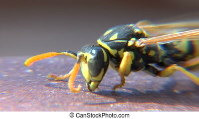 Wasp clean itself - This is a macro shot of a newborn wasp...