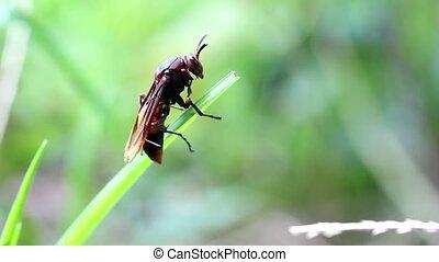 Wasp climbing a blade of grass