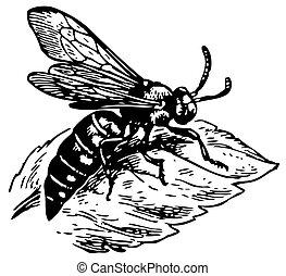 Wasp Dioxy scincta