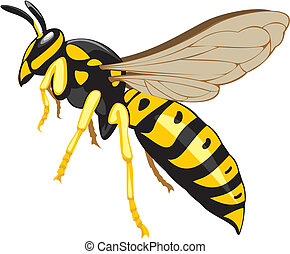 wasp - household pest, pest control, social insect