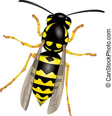 Wasp - Illustration of a wasp