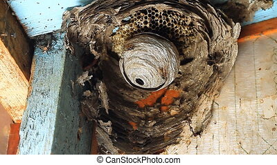 Wasp in Nest.