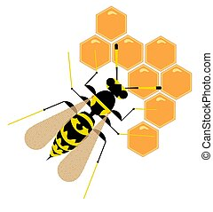 Wasp on honeycombs on a white background