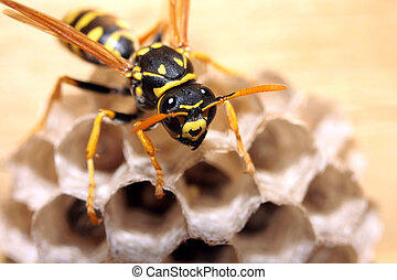 Wasp protecting its nest