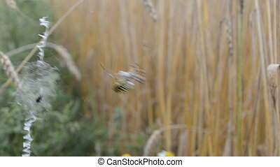 wasp spider fly prey web