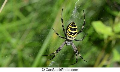 wasp spider web grass
