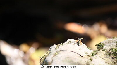 wasp standing on rock nature spring scene