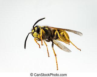 wasp - Shot of a wasp from below.