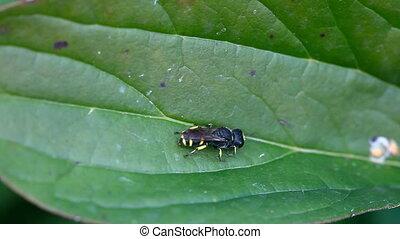 Wasp. - Wasp on a leaf, macro.