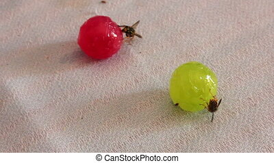 Wasps are sitting on candies