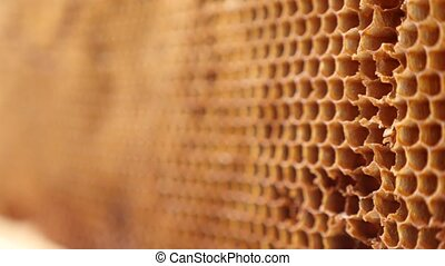 Wasps collect the remains of honey from honeycombs. 4k, slow...