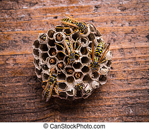 Wasps in comb on rustic wooden board