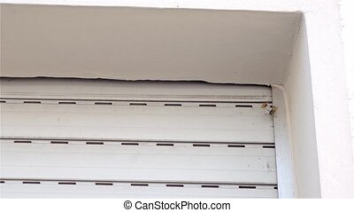 Wasps' nest by the window in the windows shutter box - Slow...