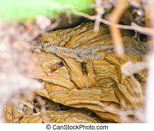Wasps nest in the wild forest