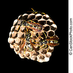 wasps on comb on a black background. macro