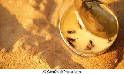 Wasps stuck to the condensed milk