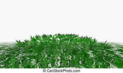 wasser, cannabis, zurückwerfend