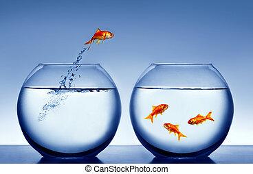 wasser, goldfisch, springende , heraus