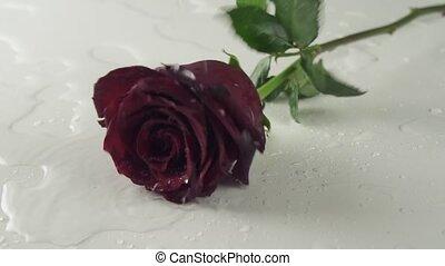 wasser, langsam, rose, bewegung, hintergrund, fallender , weiß rot