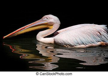 wasser, pelikan, schwarz, reflexion, hintergrund