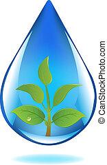 wasser, pflanzenkeim, tropfen