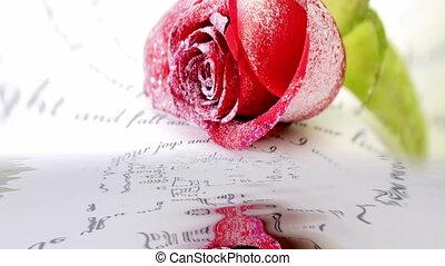 wasser, rose, zurückwerfend, rotes
