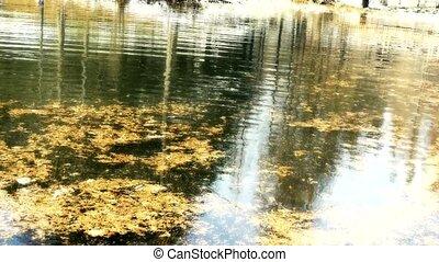 Wasser, wald, Reflexion