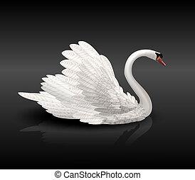 wasser, weißer schwan, schwarz