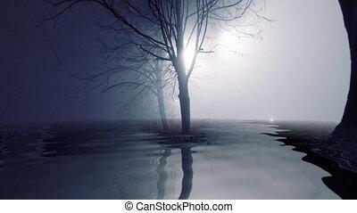 wasser, zurückwerfend, bäume