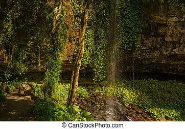 Wasserfall im Dorrigo National Park, Australien - Tropischer...