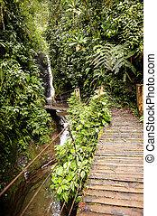 wasserfall, in, der, rainforest, von, ekuador
