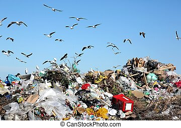 Waste disposal site with seagulls and herons scavenging for food