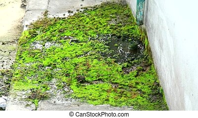 """Wastewater from the damaged pipes causes the moss to grow on concrete, concept survival on crisis"""
