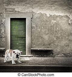 Watchdog in front of the home door