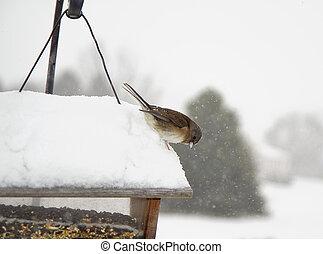 Watchful Bird on Feeder
