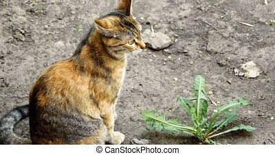 Watchful calico cat sitting on the ground with plant -...