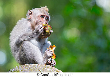 A monkey keeps an eye on its surroundings in Monkey Forest, Ubud, Bali, Indonesia.