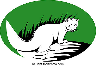 Watchful stoat - Illustration of a watchful stoat in a green...