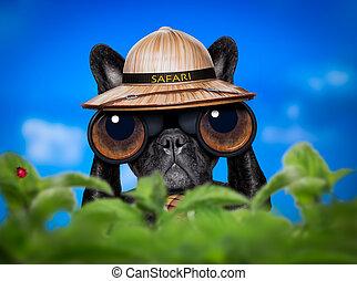 watching dog with binoculars