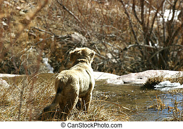Watching - Puppy out for a first adventure in the wilderness