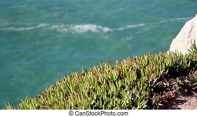 Watching the water on a cliff green grasses on top of the...