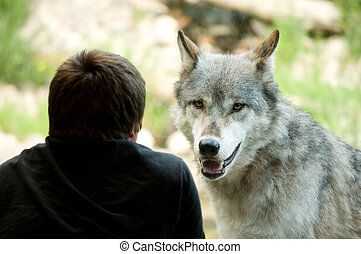 boy watching the wolf watch him through glass