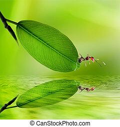 wate, feuilles, refléter, vert