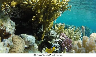 Water and corals