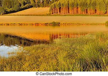 water and grass at sunset