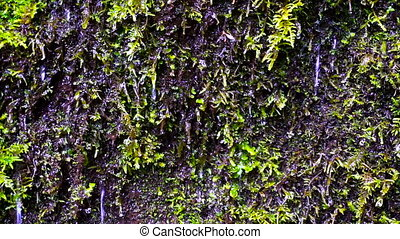 Water and Moss - Water dripping off of moss in Oregon