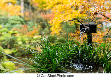 Water bamboo fountain in Japanese garden with maple tree