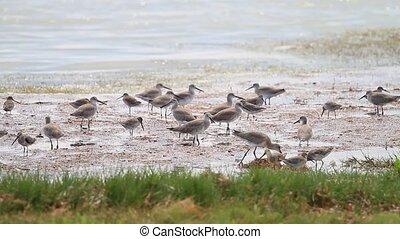 Water Birds in the Everglades